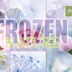 """Ab dem 11. Dezember gibt es die LE """"Frozen Nature"""" zu kaufen"""